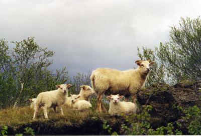 lampakset