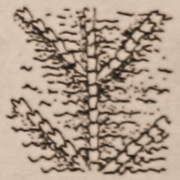 aran-neuleet-elamanpuu