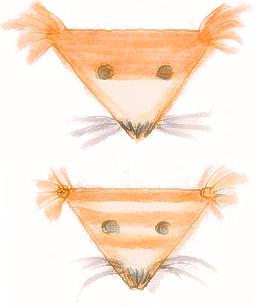kaksi-kettua